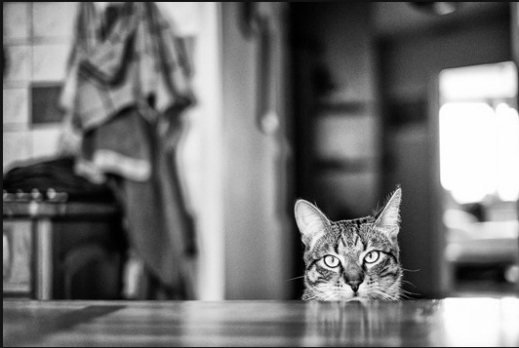صور قطط , خلفيات قطط حلوه , صور قط للكمبيوتر والجوال , بالصور قطط جميلة جدا ورائعه