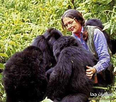 ���� ���� � ������ ������� � ������� �� ����� ���� ������� ��������� Dian Fossey