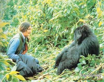 ديان فوسي ، السيرة الذاتية و معلومات عن عالمة سلوك الحيوان الأمريكية Dian Fossey