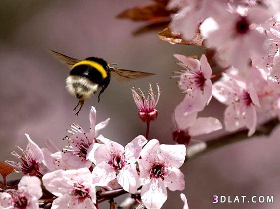 صور الاعتدال الربيعي , اجمل صور الاعتدال الربيعي 20-3-2014
