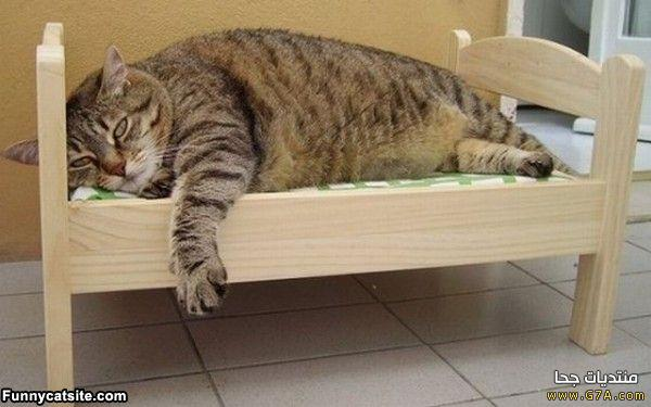 ��� ��� ����� ����� � ���� ��������� ����� ��� ����� Funny Cats 2015