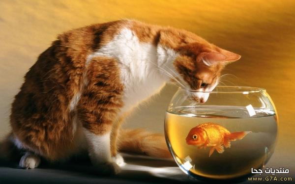 صور قطط مضحكة جديدة ، اجمل كاريكاتير مضحكة على القطط Funny Cats 2015