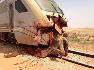 صور حادث تصادم قطار ركاب بجمل فى الرياض اليوم 20144