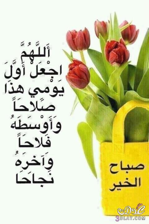 صور صباح الورد good morning