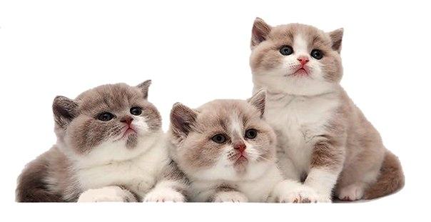 �� ��� ���� , cats photos , ������