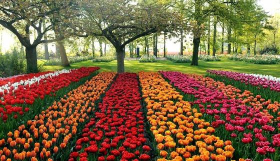 صور طبيعية , صور الربيع , صور الطبيعة الخضراء في فصل الربيع