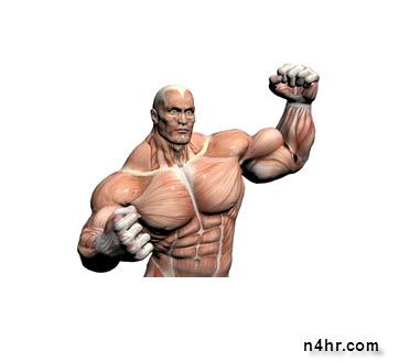 أكدت دراسة سويدية ان العضلات القوية قد تبعد خطر السرطان عن الرجال