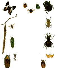 تفسير حلم جميع انواع الحشرات