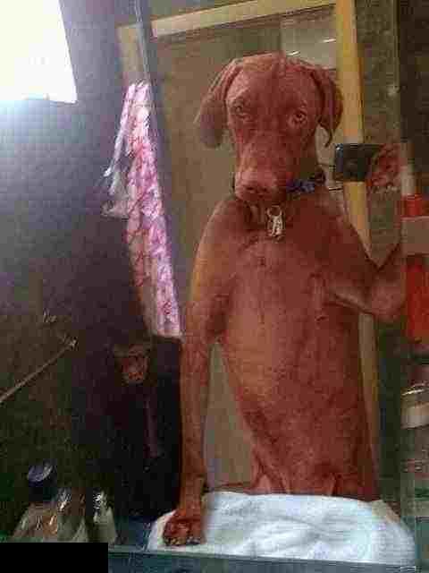 صور حيوانات سيلفي selfie