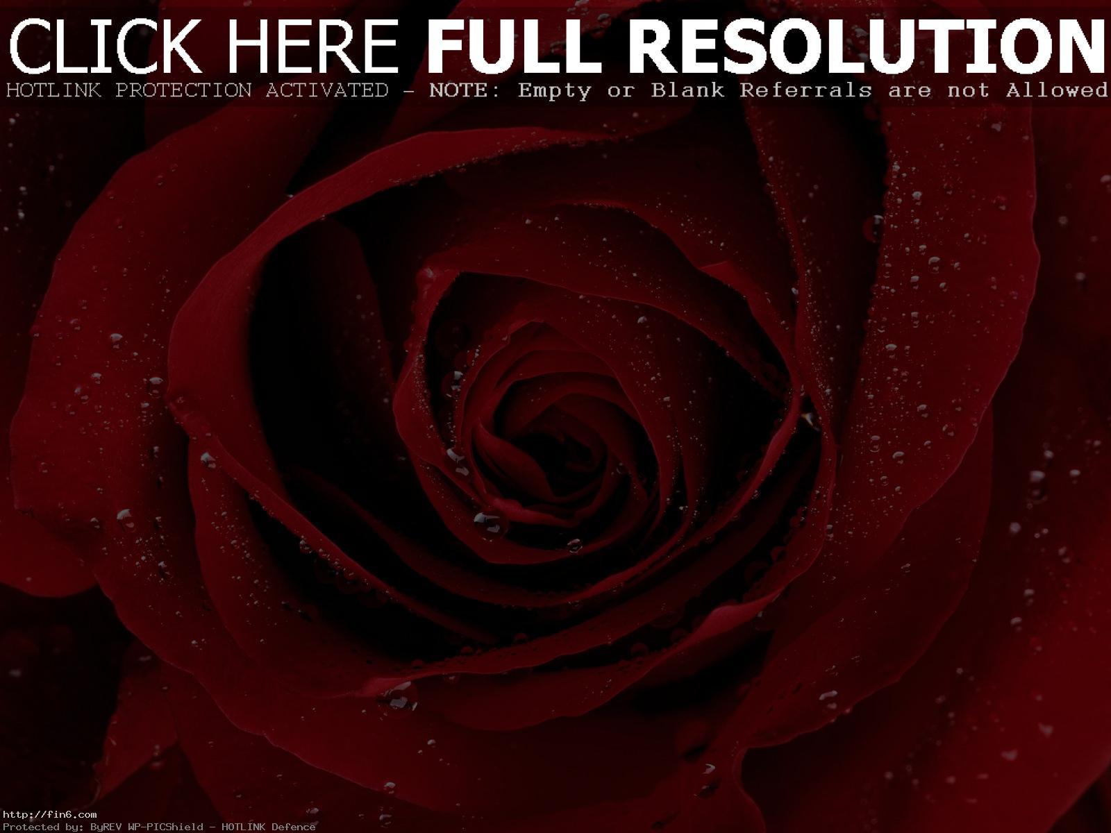 صور ورد hd , حلفيات ازهار عالية الجودة , صور و خلفيات , Flowers wallpapers