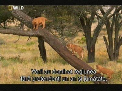 القناة الوثائقية NatGeo Wild Hungary مجانا على قمر Eutelsat 9A