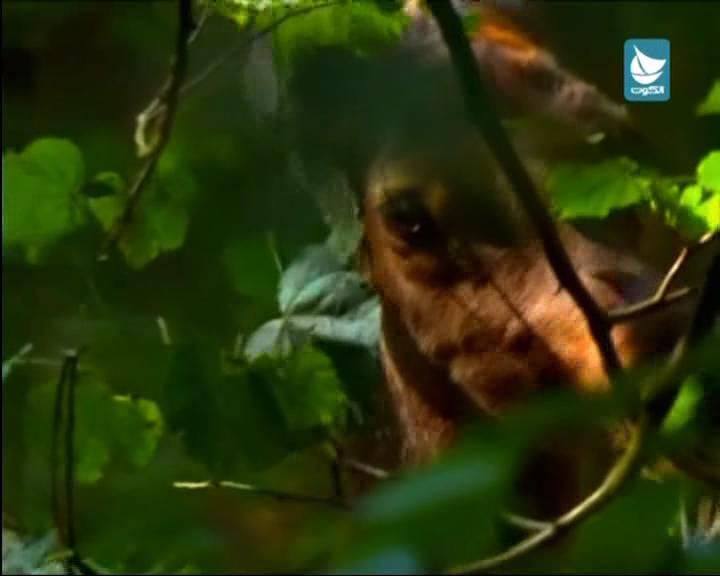 احدث تردد قناة الكوت Al Kout TV الايرانيه الفضائيه