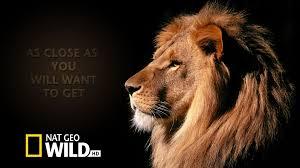 احدث تردد قناة ناشونال جيوغرافيك البرية AD Nat Geo Wild HD قنوات البرامج الوثائقية hd