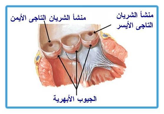 عملية تطعيم الشرايين التاجية