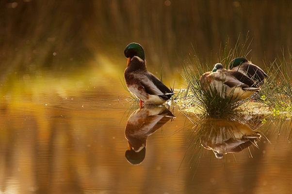 صور طبيعية حيوانات طيور اتش دي بدون حقوق