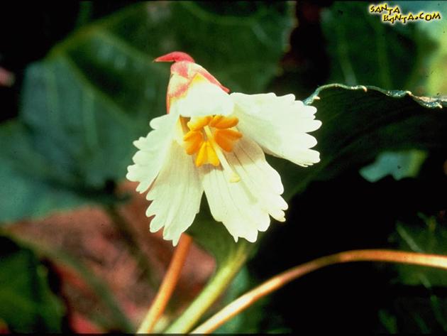 صور أزهار وورود - خلفيات مميزة ورود وازهار
