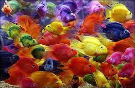 صور أسماك زينه أسماك ملونه روعه