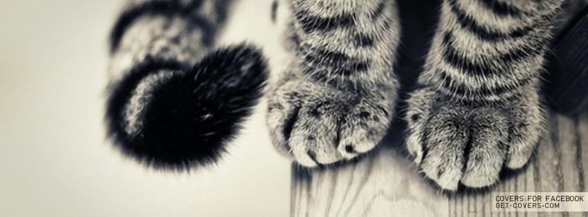 كفرات كول راقية جدا بطيخ قطط نسكافي - كفرات للبنات تحفه ميكي مواوس