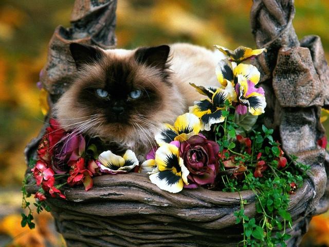 صور قطط جميلة بجودة عالية hd