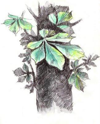 رسومات جميلة للطبيعة