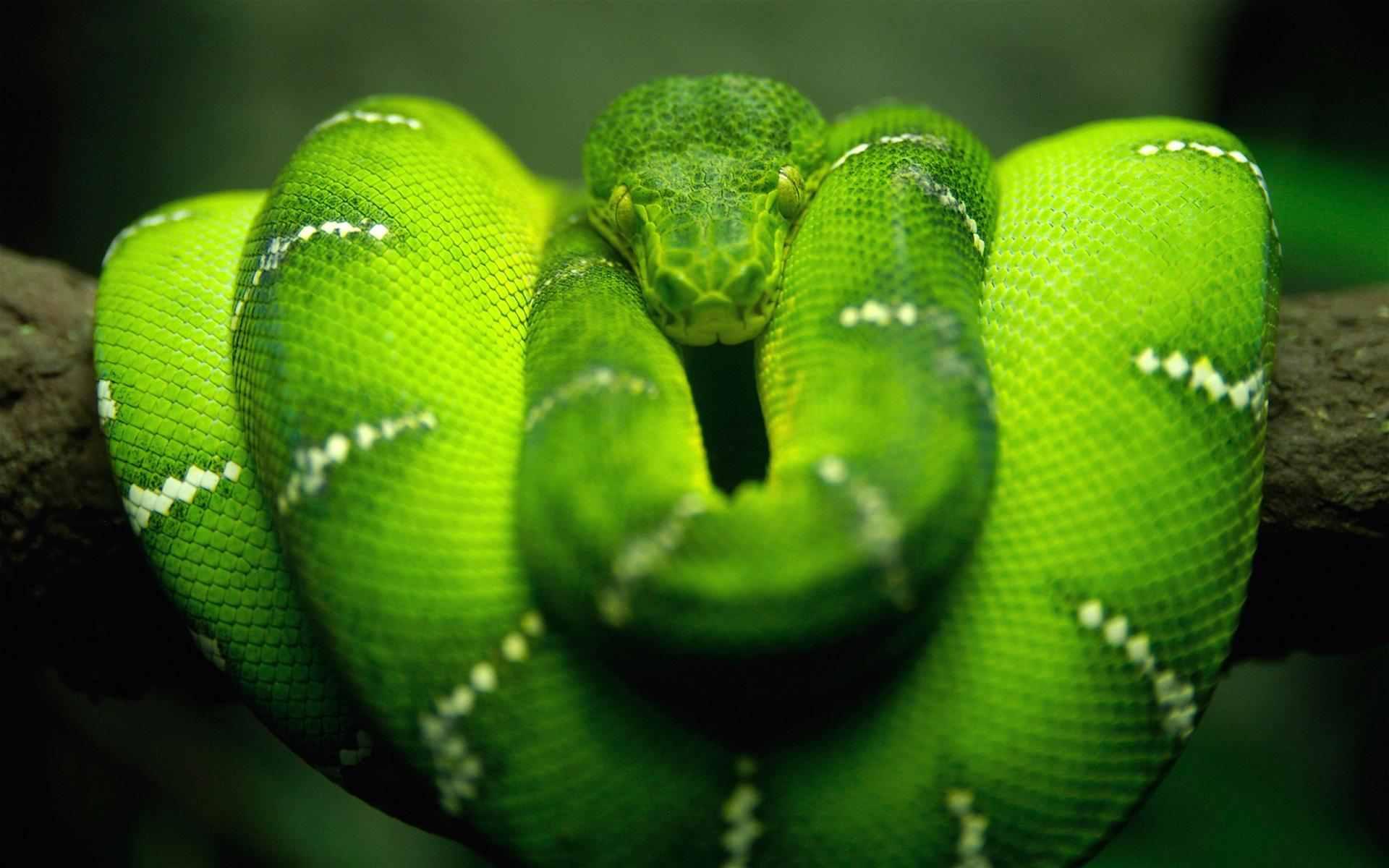 اخطر مكان في العالم غابات الامازون