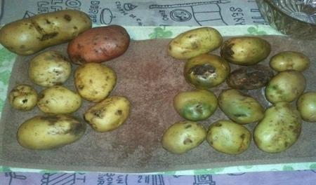 مفاجأة صادمة البطاطا والسمك يتصدران قائمة المواد الغذائية الخطرة والاسباب