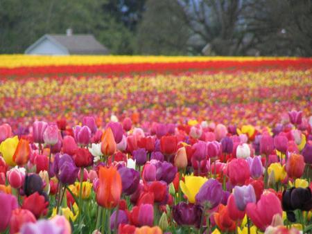 مقدمة قصيرة عن فصل الربيع - إذاعة عن الربيع - خطبة محفلية عن فصل الربيع - وصف الربيع