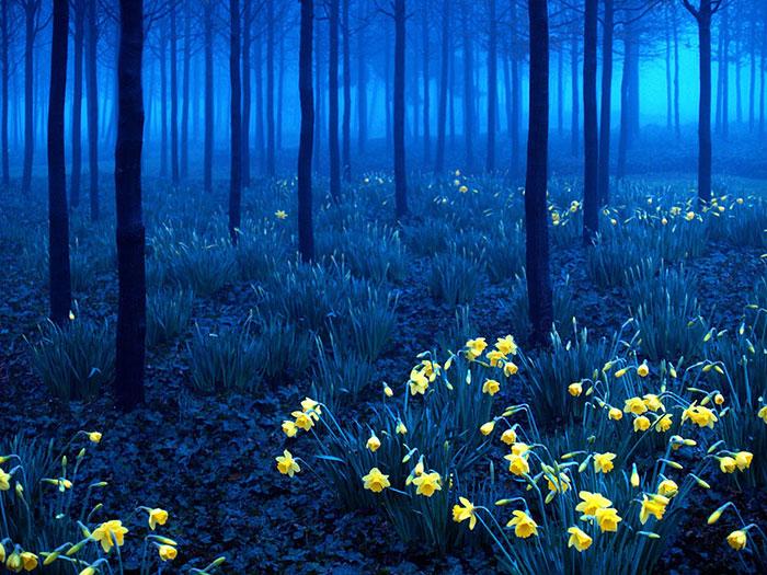 صور طبيعية لتويتر - غلاف مناظر طبيعية خلابة لتويتر - اجمل صور لتويتر
