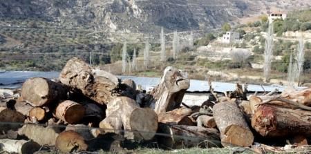 إجراءات لردع الاعتداءات على الأراضي الحرجية