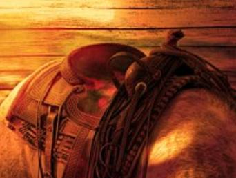 تفسير حلم ركوب الخيل في المنام - رؤية ركوب الحصان - ماهو حلم الحصان