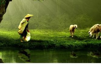 تفسير حلم راعي يرعى الغنم في المنام , معنى رؤية راعي الغنم بالحلم