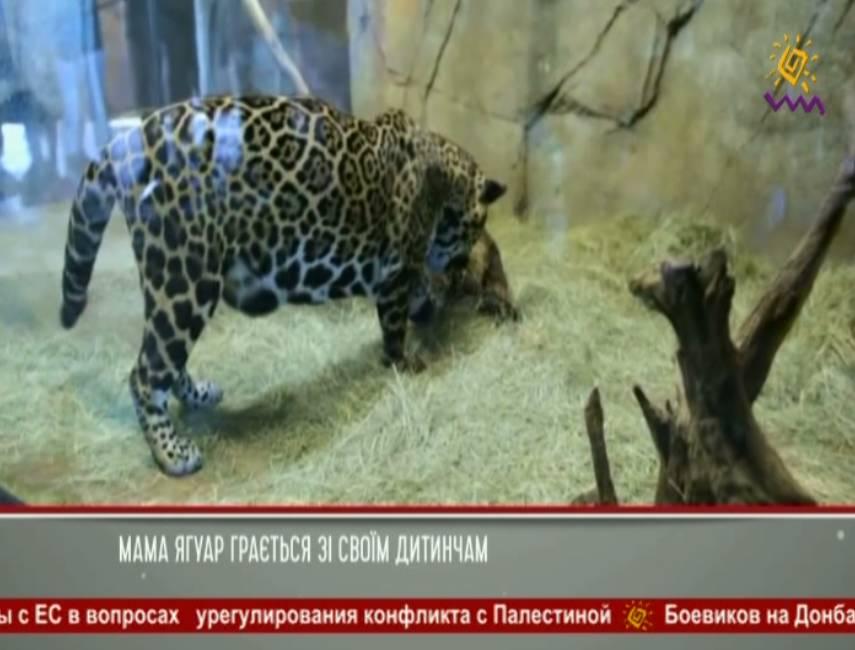 تردد قناة Black Sea TV على القمر Astra 4A