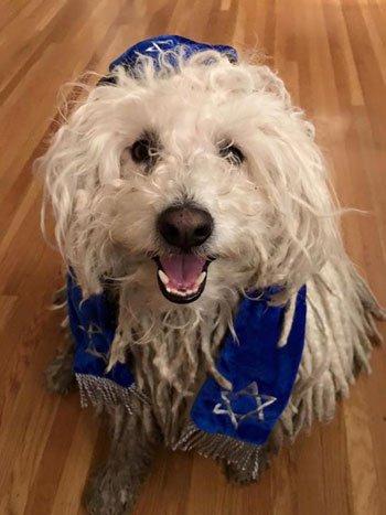 مؤسس فيسبوك يحتفل بعيد الحانوكا الإسرائيلي وينشر نشر صورة لكلب يرتدي كوفيه