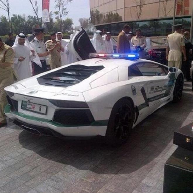 صور مذهلة في دبي الجمال العمراني والثراء بامتلاك الاسود و النمور