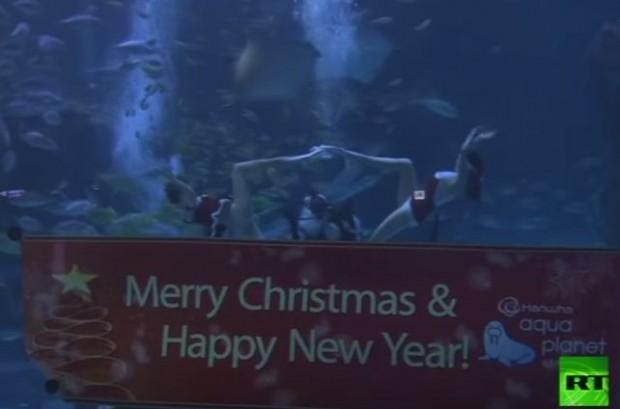 فيديو غطاسون ثلاثة في ملابس بابا نويل يسبحون في حوض أسماك كوري جنوبي
