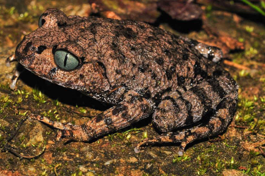 بالصور تعرف على أجمل الحيوانات المكتشفة حديثاً حتى عام 2016