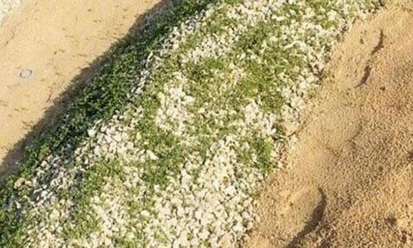 حقيقة القبر العشبي في السعودية , صور القبر الذي نبت عليه العشب في مقبرة الثليماء
