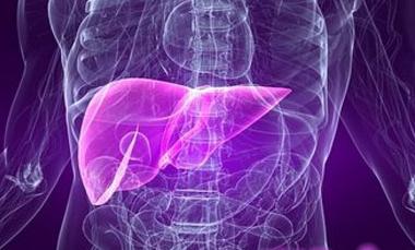 مجموعة اعشاب طبية تعالج اضطرابات وظائف الكبد
