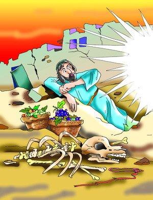 قصة الحمار , قصص الحيوانات في القرآن الكريم