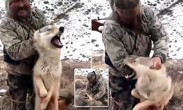 صورة سيلفي صياد مع ذئب , فيديو صياد يرغم ذئب على التقاط سيلفي قبل قتله