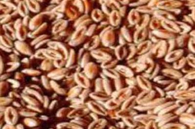 فوائد بذور القاطونة , ماهي بذور القاطونة , بذرة القاطونة للتخسيس للشعر