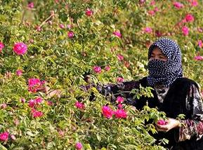 زراعة الورد في الحلم , تفسير حلم زراعة الورد في المنام , رؤية حلم الزراعة بالمنام