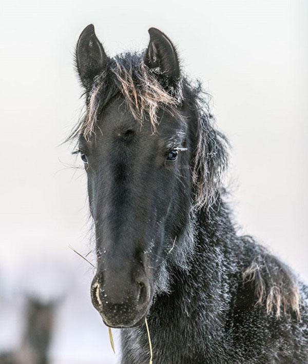 صور خيول سوداء في الثلج , صور الخيول البنية في الخريف بجودة عالية hd
