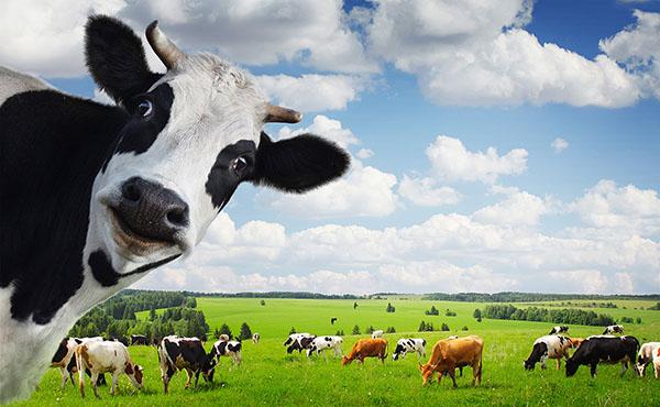 شاهد صور روث فضلات الأبقار مختلطة بالقش للبيع على موقعي eBay وأمازون