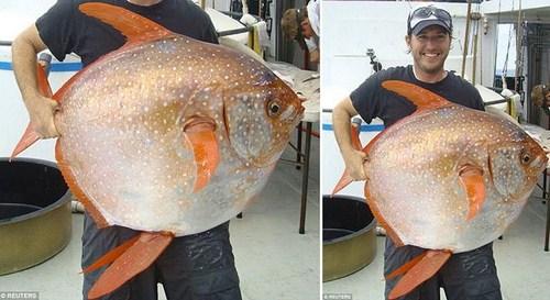 معلومات عن سمكه القمر , صور اول سمكه فى العالم من ذوات الدم الحار