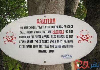 معلومات عن شجرة المنشنيل الشجرة الأخطر في العالم