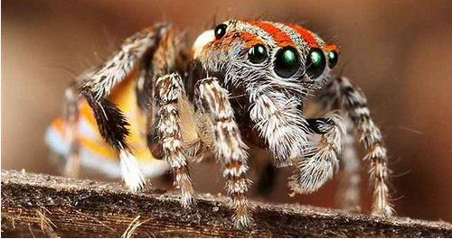 انواع العناكب, ماهي العناكب السامة, اكل العناكب, اضرار العنكبوت