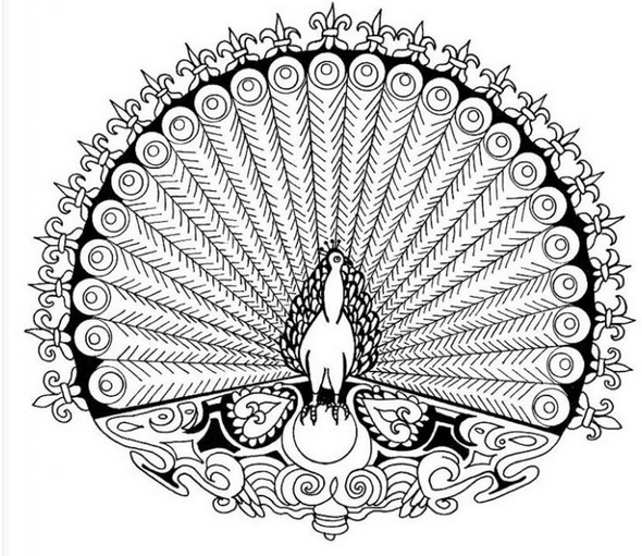 رسم طاووس تلوين