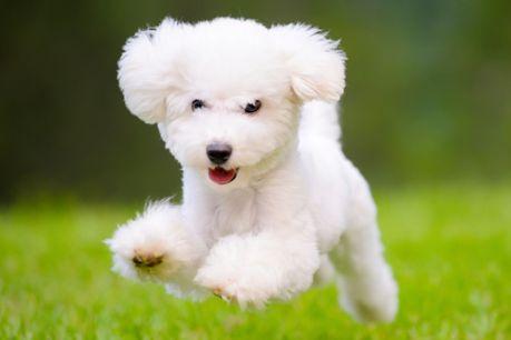 تفسير حلم الكلب الملون بالابيض و الاسود معنى الكلب الملون في الحلم الإبداع الفضائي
