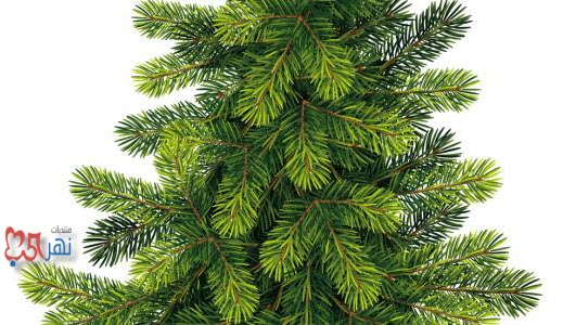 اذاعة كاملة عن أسبوع الشجرة , مقدمة عن أسبوع الشجرة